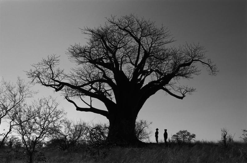 baobab duftkerze les exclusives aurum maxi max 7kg. Black Bedroom Furniture Sets. Home Design Ideas